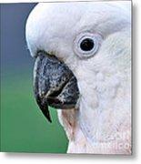 Australian Birds - Cockatoo Up Close Metal Print