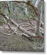 Australian Native Tree 4 Metal Print