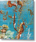 Australian Seahorses Metal Print