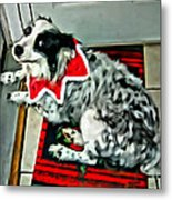 Australian Shepherd Christmas Dog Metal Print