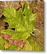 autumm is coming 3 - A carpet of autumn color leaves Metal Print