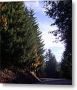 Autumn 12 Metal Print