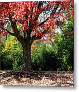 Autumn Ablaze Metal Print