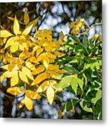 Autumn Ash Tree Leaves Under The Sun Metal Print