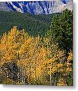 Autumn Aspens And Longs Peak Metal Print