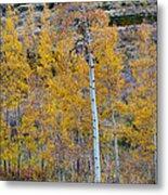 Autumn Aspens Metal Print by James BO  Insogna
