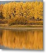 Autumn Aspens Reflected In Snake River Metal Print