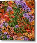 Autumn Asters Metal Print