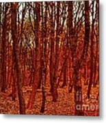 Autumn At Formby Woods  Metal Print