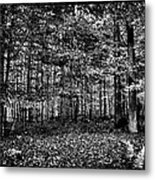 Autumn At Mccauley Mountain IIi Metal Print
