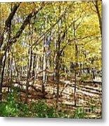 Autumn At Waterfall Glen Metal Print