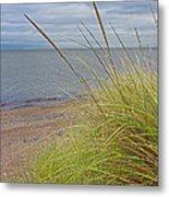 Autumn Beach Grasses Metal Print
