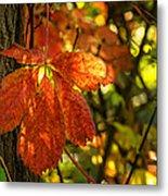 Autumn Begins 2 Metal Print