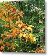 Autumn Begins At Breakheart Reservation Metal Print