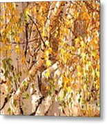 Autumn Birch Leaves Metal Print