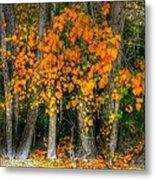 Autumn Breakout No.2 Metal Print