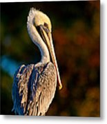 Autumn Brown Pelican Metal Print