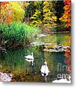 Autumn By The Swan Lake Metal Print