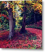 Autumn Carpet In The Enchanted Wood Metal Print