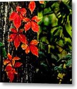 Autumn Climber Metal Print