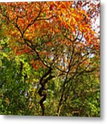 Autumn Color At Old Woman Creek 2 Metal Print
