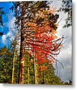 Autumn Color In The Trees Metal Print