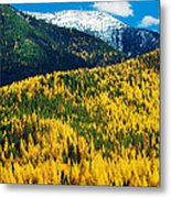 Autumn Color Larch Trees In Pine Tree Metal Print