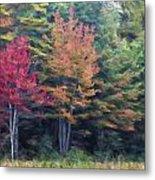 Autumn Color Painterly Effect Metal Print