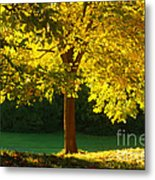 Autumn Colors 10 Metal Print