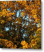 Autumn Colors 11 Metal Print