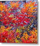 Autumn Colors - 113 Metal Print
