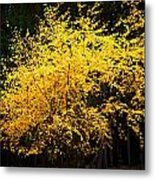 Autumn Colors 4 Metal Print