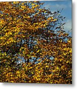 Autumn Colors 5 Metal Print
