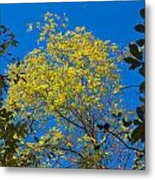 Autumn Colors Against The Sky Metal Print