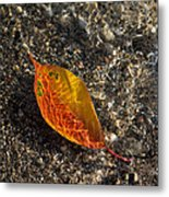 Autumn Colors And Playful Sunlight Patterns - Cherry Leaf Metal Print