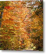 Autumn Colors - Colorful Fall Leaves Wisconsin IIi Metal Print