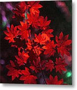 Autumn Colors Early Metal Print