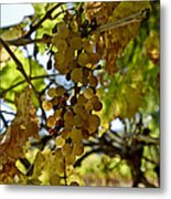 Autumn Colors In Wine Country Metal Print by Patricia Sanders
