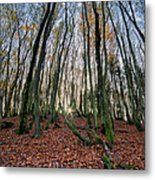 Autumn Colors In The Forrest Metal Print