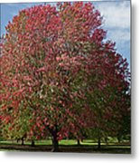Autumn Colors Metal Print by Natural Focal Point Photography