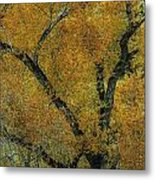 Autumn Contrast Metal Print