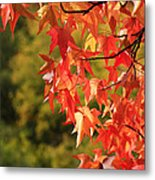 Autumn Cornered Metal Print