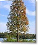 Autumn Cypress Tree Metal Print