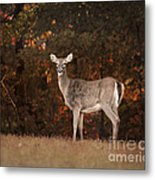Autumn Doe Metal Print