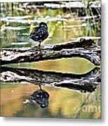 Autumn Duck Reflections Metal Print