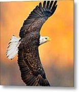 Autumn Eagle Metal Print