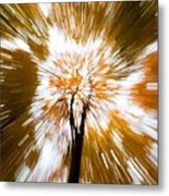 Autumn Explosion Metal Print by Dave Bowman