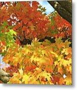 Autumn Extravaganza Metal Print