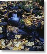 Autumn Fall Colors Starvation Creek State Park Metal Print