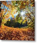 Autumn Fall Landscape In Forest Metal Print